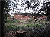 SU5985 : View through the trees by Bill Nicholls