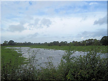 SJ3020 : Flooded fields at Maesbrook by John Firth