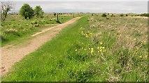 NT4681 : Path, Aberlady Bay by Richard Webb