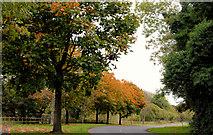 J4846 : The Quoile Road near Downpatrick by Albert Bridge