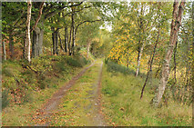 NH6750 : Track along the side of Taindore Wood by Steven Brown