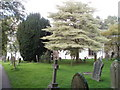 SO5113 : Churchyard trees, St Peter's, Dixton by Jaggery
