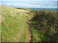 SX0040 : Coast path approaching Maenease Point by Philip Halling