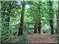 SS9700 : Killerton: hilltop by Stephen Craven