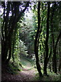 SM9624 : Path through Treffgarne Woods by ceridwen
