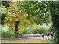 NY8362 : An autumn ramble by Joan Sykes