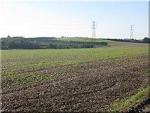 TR3156 : Farmland near Statenborough by Nick Smith