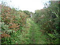 SW4740 : Green lane between Trevail Mill and Trevalgan Farm by Jeremy Bolwell