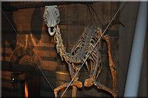 TQ2679 : London : Kensington - Natural History Museum Dinosaur by Lewis Clarke