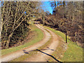 SO4016 : Track entering Llyfos Wood by Trevor Rickard