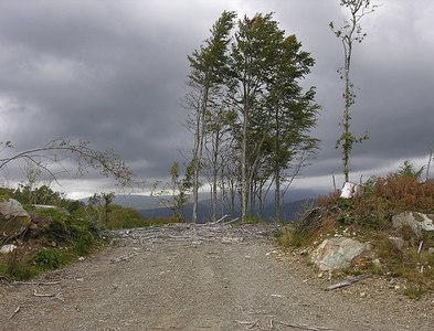 SH7415 : Deciduous trees by Nigel Brown