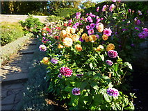 TQ1352 : A riot of colour in the rose garden at Polesden Lacey by pam fray