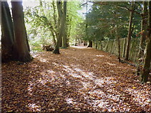 TQ1352 : Woodland path west of the gardens in Polesden Lacey by pam fray