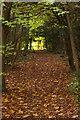 TQ4461 : Path through Cuckoo Wood by Christopher Hilton