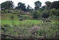 TQ5942 : Picnic area, Barnett's Wood Local Nature Reserve by N Chadwick