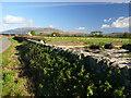 NX4357 : Borrowmoss Farm by Andy Farrington