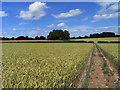 SU7445 : Farmland, Long Sutton by Andrew Smith