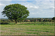 TQ1328 : Tree and view, Sharpenhurst Hill by Robin Webster
