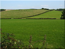NS3478 : Fields at North Kirkton by Lairich Rig