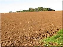 SO5793 : Cultivated land, Brockton by Richard Webb