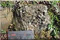 SK7605 : A Brachiopod Nest by Ashley Dace
