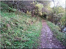 NY9038 : Footpath along Middlehope Burn by Philip Barker