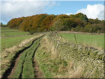 SK2376 : Track approaching Stoke Wood by Graham Hogg