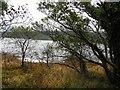 G8754 : Shore, Inishtemple Island by Kenneth  Allen