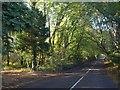 SX7978 : B3387 passing Colehays Plantation by Derek Harper
