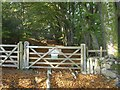 SX7878 : Gate into Yarner Wood by Derek Harper