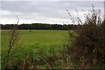 SD6209 : Horses grazing in a field by the B5408 by Ian Greig
