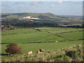 TQ3807 : Sheep on South Downs by Oast House Archive