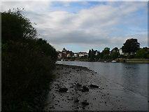 TQ1672 : Mud bank on the Thames near Eel Pie Island by Eirian Evans
