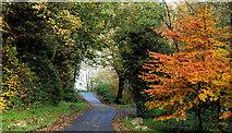 J3996 : Autumn at Glenoe 2010-1 by Albert Bridge