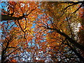 NT1196 : Autumn leaves in Bambricks Wood by William Starkey