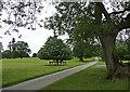 SJ4313 : Parkland near Ford by Stephen Richards