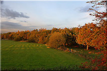 SJ6298 : Autumn trees hide the line of the disused railway north from Byrom Lane by Ian Greig
