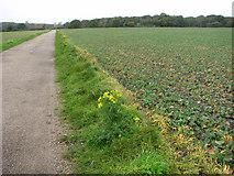 TM5284 : The Suffolk Coast Path through the Benacre Estate by Evelyn Simak
