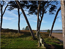 NT6378 : East Lothian Landscape : It's A Mad, Mad, Mad, Mad World at Hedderwick Sands by Richard West