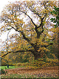 TG2202 : Autumnal tree on Dunston Common by Evelyn Simak