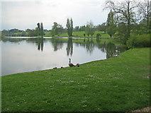 ST9770 : Bowood Lake - 3 by Trevor Rickard