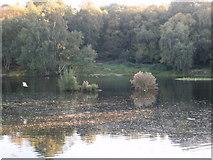 TQ2686 : Vale of Health Pond, Hampstead Heath by Peter S