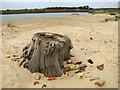 TM5280 : Debris on the beach by Evelyn Simak