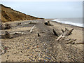 TM5280 : Tree graveyard on the beach by Evelyn Simak