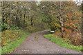 NM8724 : Road to Balinoe by Steven Brown