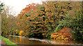 J2866 : Autumn colours at Lambeg by Albert Bridge