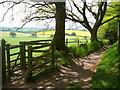SJ4952 : Sandstone Trail below Larkton Hill by Colin Park