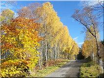 NH5292 : Autumn colour by Gruinards Lodge by sylvia duckworth