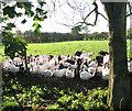 TM2689 : Curious turkeys by Darrow Green Farm by Evelyn Simak