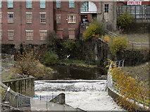 SD8913 : River Roch, Weir by David Dixon